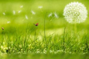 Fête du printemps